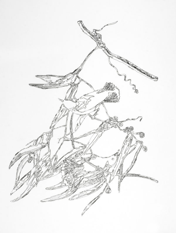 Prothonotary Warbler, Plate III (3), 2010